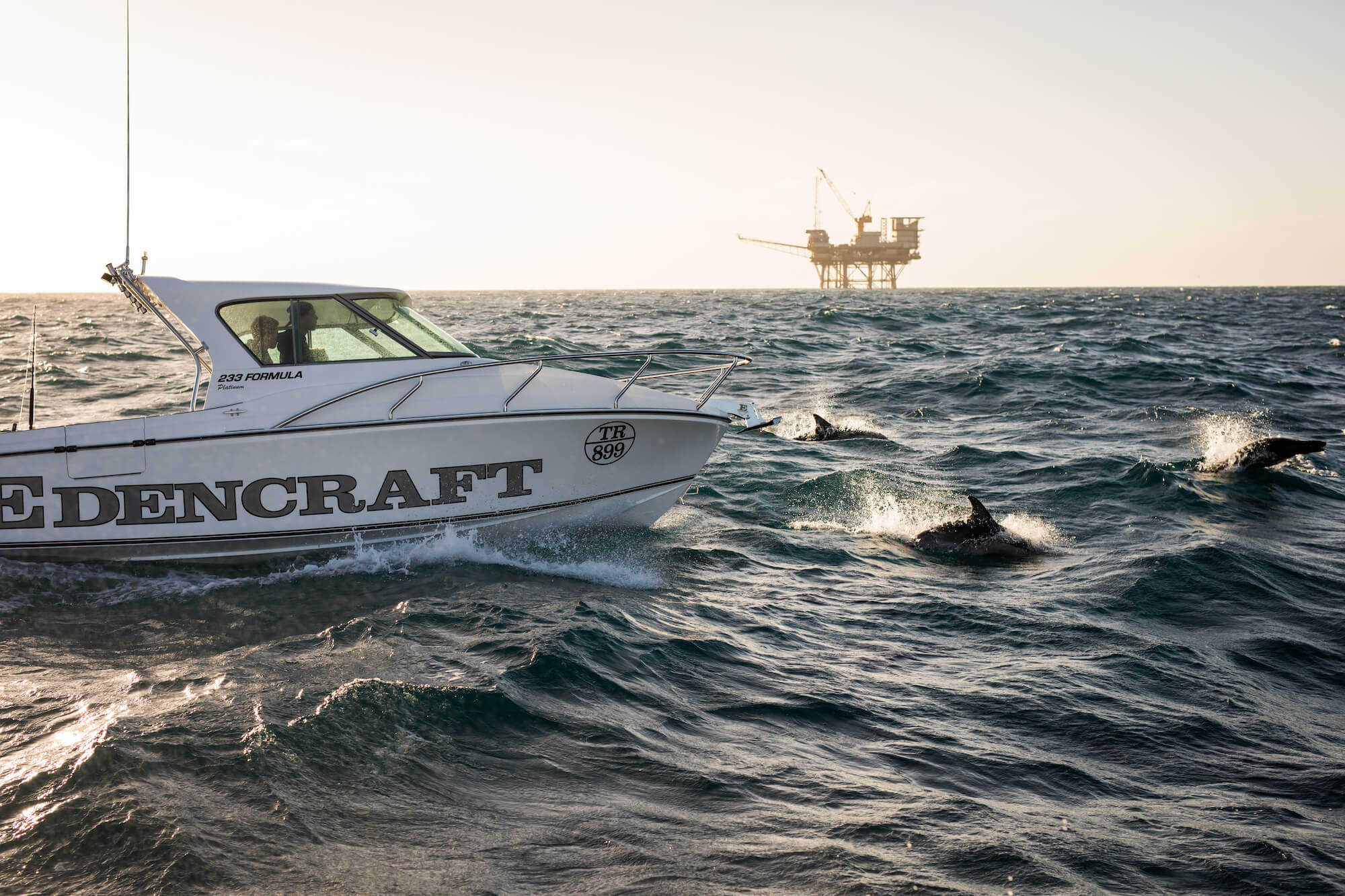 Edencraft 233 Formula PlatinumDolphins swim alongside an Edencraft 233 Formula Platinum offshore