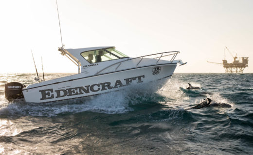 Dolphins swim alongside Edencraft 233 Formula Platinum Hardtop model